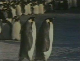 oxygene 4, clip aux pingouins de 1989